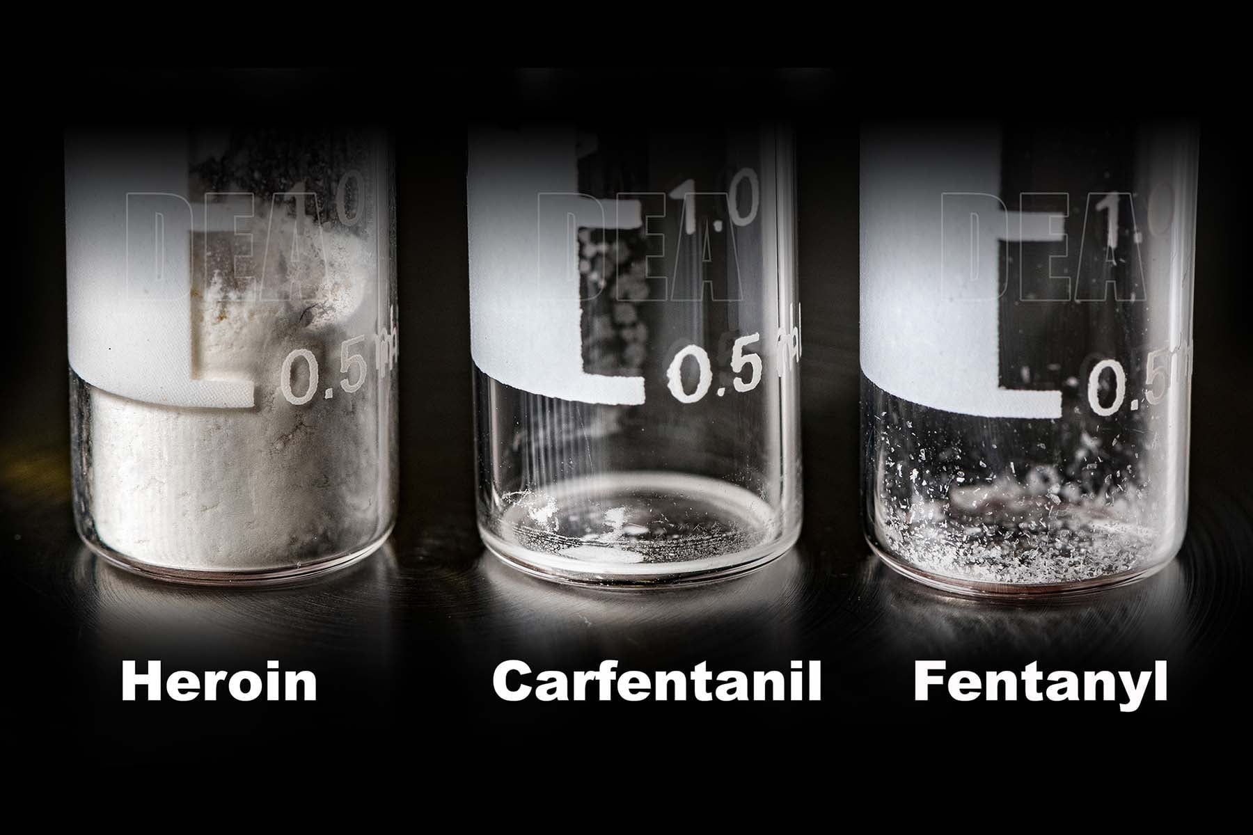 carfentanil, fentanyl and heroin