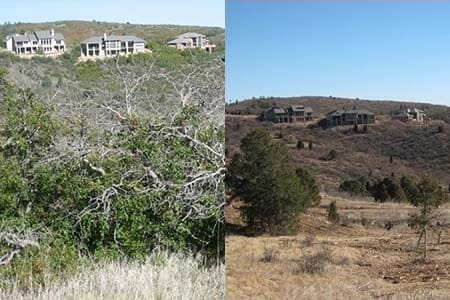 before and after views of a wildfire mitigation project