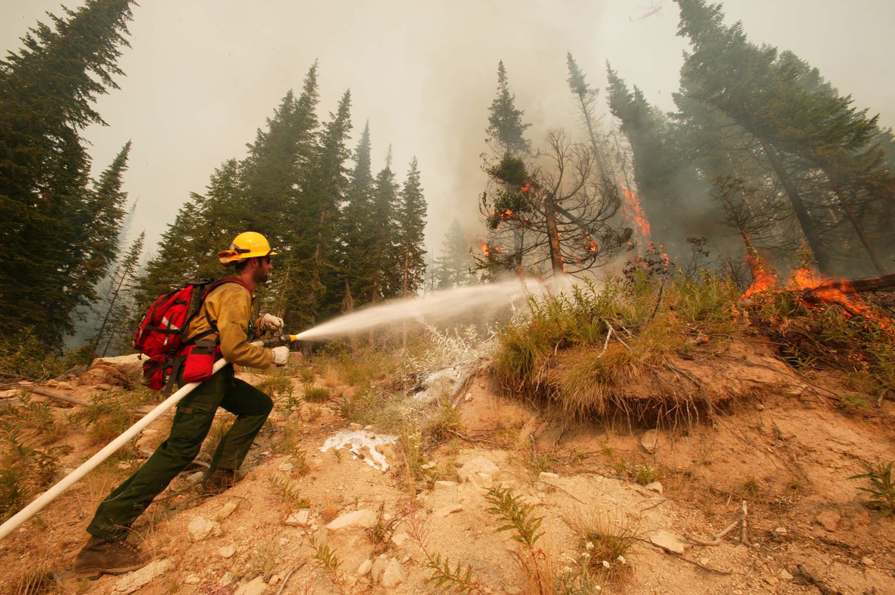 wildland firefighter using a hose on a fire