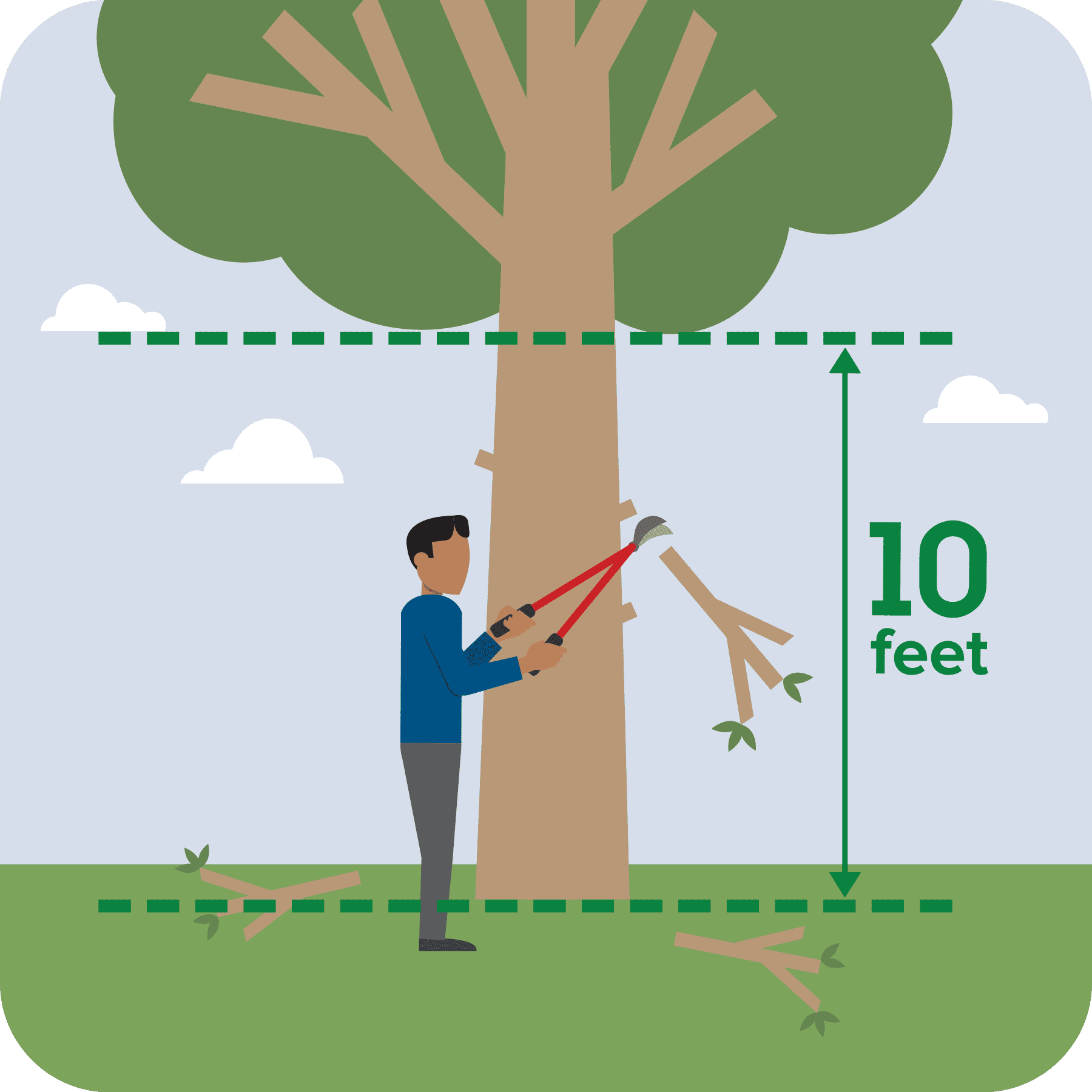 Man cutting tree limbs so that they are 10 feet from the ground.