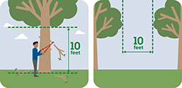 This pictograph shows trees with limbs cut 10 feet from the ground and 10 feet apart.